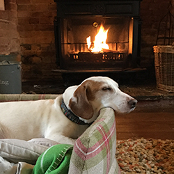 Cosy fireside at the New Forest Dog Hotel Hale Woodgreen Hampshire home dog boarding