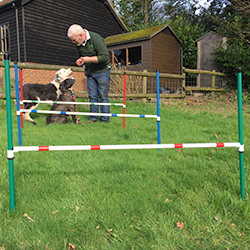 Two guests get ready to take on the agility jumps at the New Forest Dog Hotel Hampshire home dog boarding