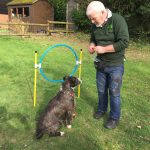 at the agility hoop at the New Forest Dog Hotel