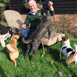 A group of dogs enjoying sun on our sun lounger at the New Forest Dog Hotel hampshire home dog boarding