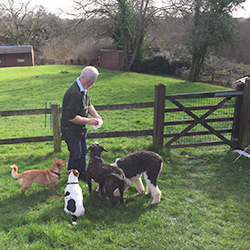 Four guests experience the benefits of play for dogs. Get ready to play in the enclosed one acre paddock at The New Forest Dog Hotel Hampshire home dog boarding
