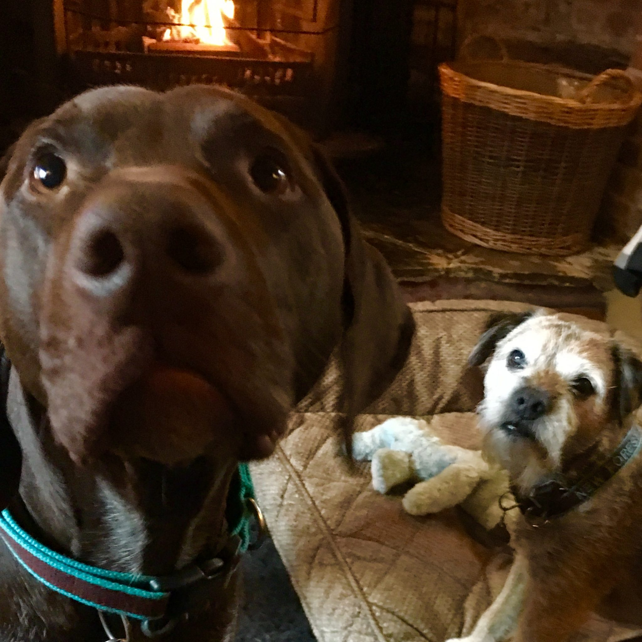 Jan from Devon checked in her Border Terrier and German Short Haired Pointer and said The New Forest Dog Hotel was a comfortable and caring home from home